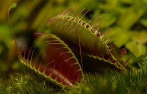 carnivorous-plant-217187_1280